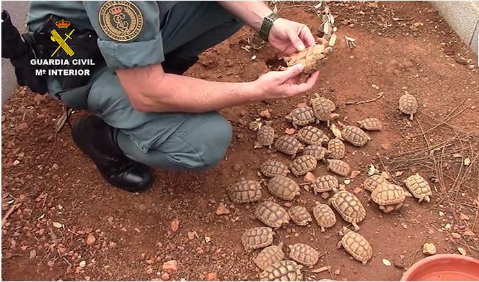 Detenciones por tráfico de tortugas