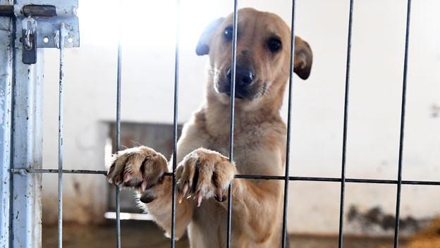 Legislatura: multas severas por maltrato animal