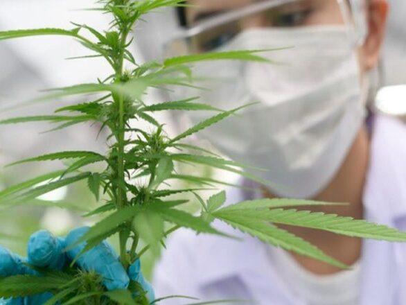La justicia cordobesa sobreseyó a un joven que cultivó marihuana medicinal